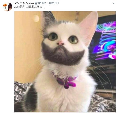 山田孝之さんにそっくりなネコ