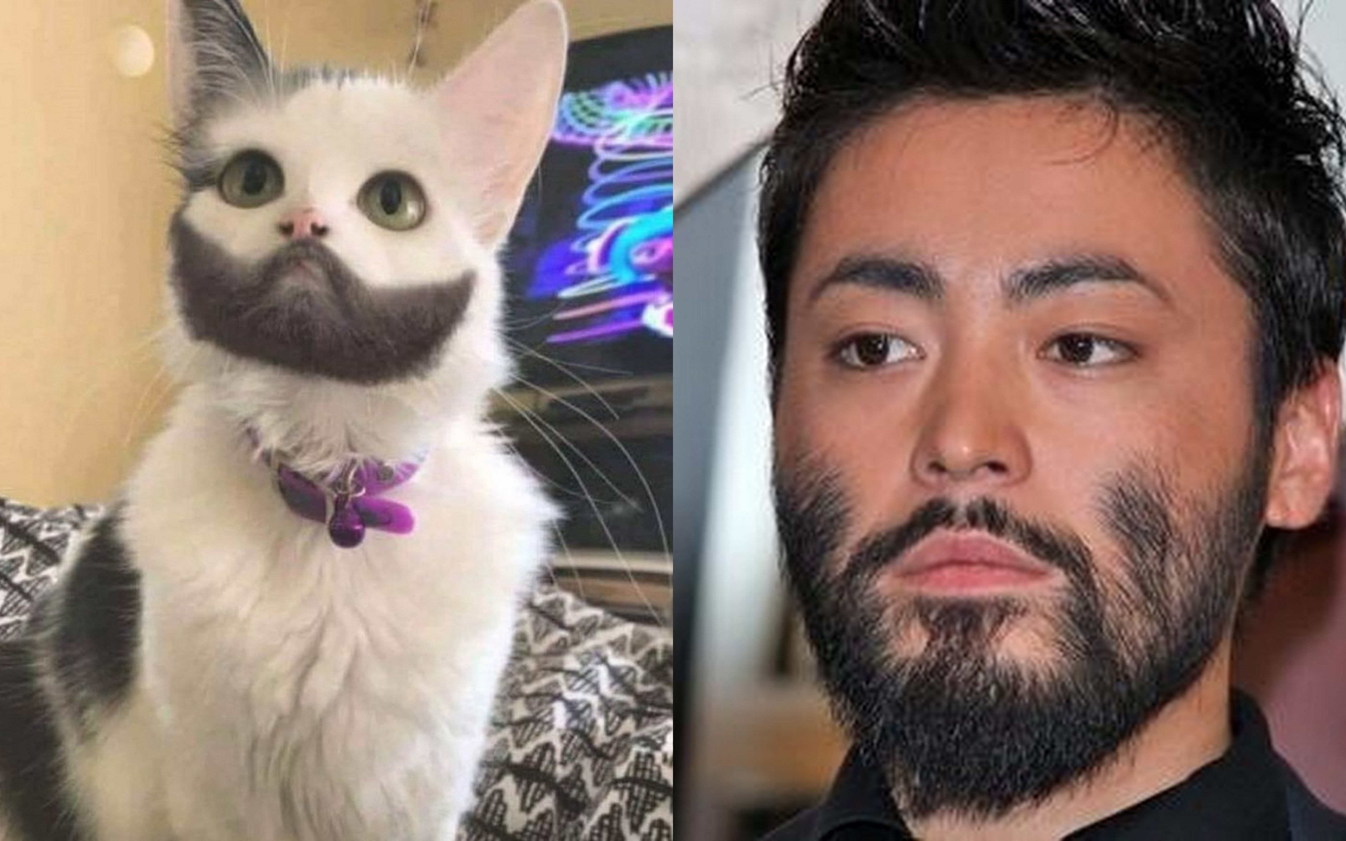 山田孝之さんとネコ