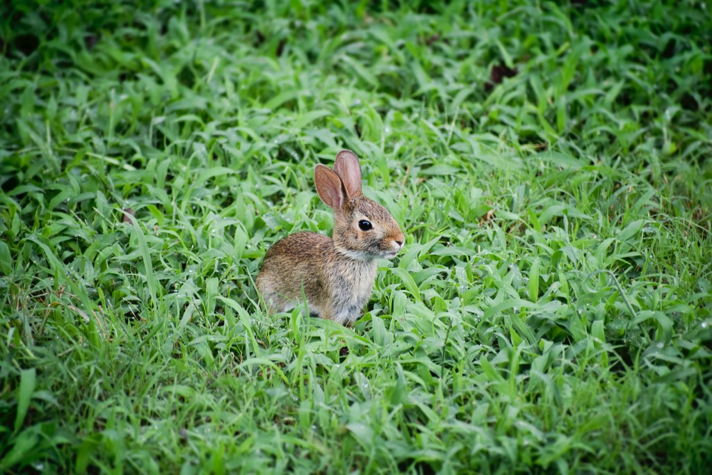 理解不能すぎる女子のおしゃれに絶句/目を赤くウサギ目のメイクってありなの?